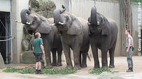 Elephants of Zoo Dresden 2014